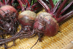 ビーツ・Red Ace Beetroot・Beta vulgaris