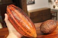 第32回 本物のチョコレート作り体験会《Bean to Bar》