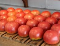 トマトWEEK
